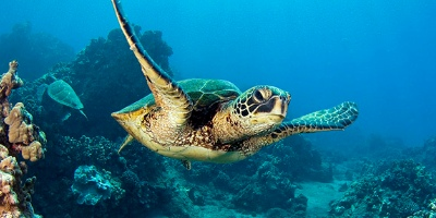 Molokini and Turtle Town